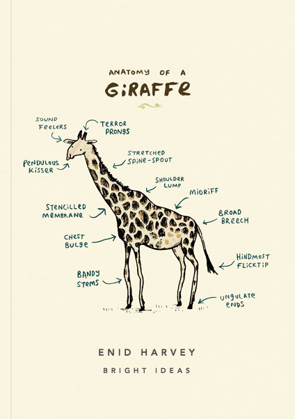 Anatomy Of A Giraffe