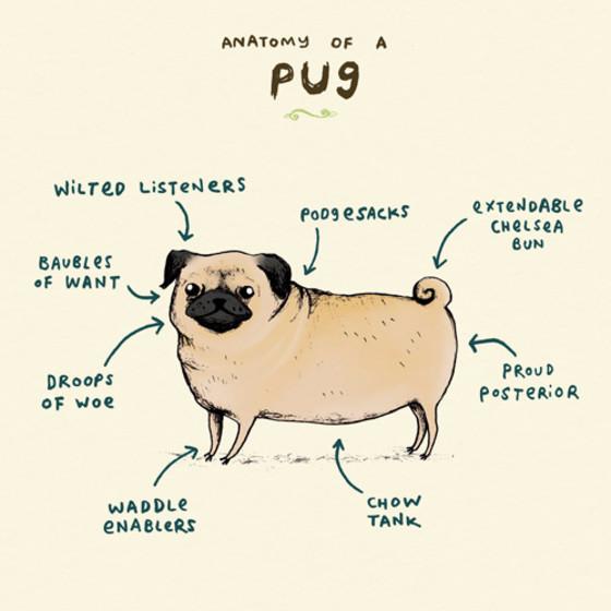 Anatomy Of A Pug   Personalised Birthday Card