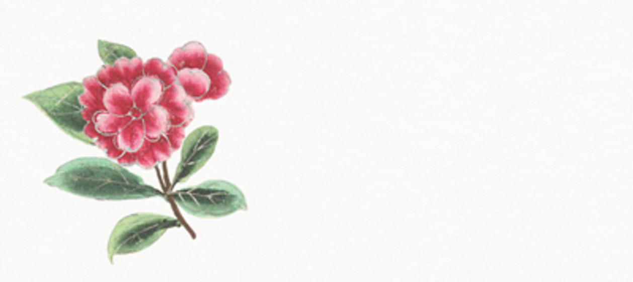Chinese Pink Florals | Personalised Place Name