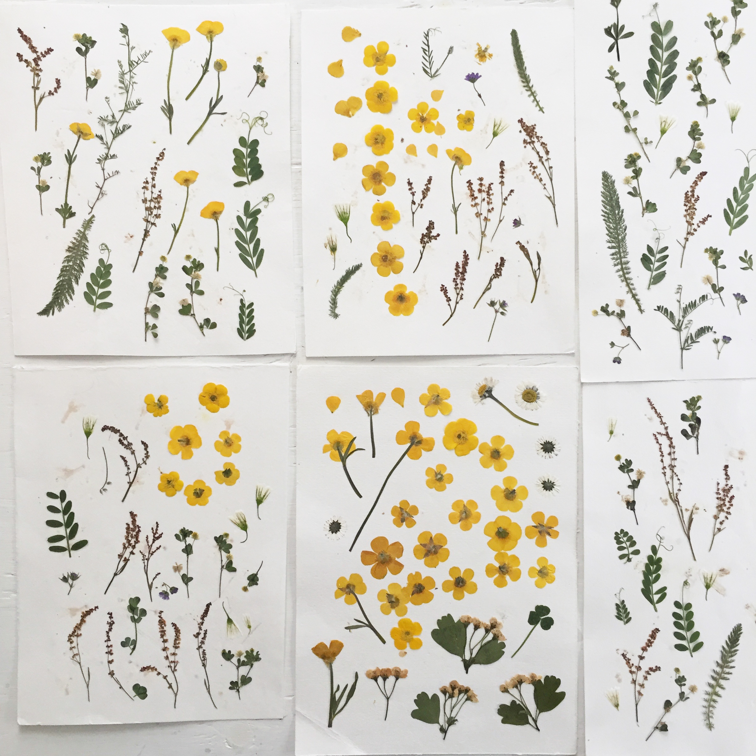Flower Picking Pressing With Mr Studio London Papier